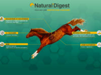 Natural'Digest